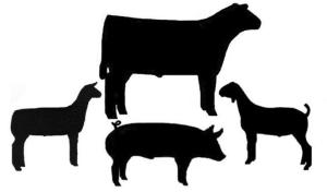 livestock cluster