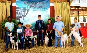 Cover photo for 2015 4-H Livestock Show and Sale