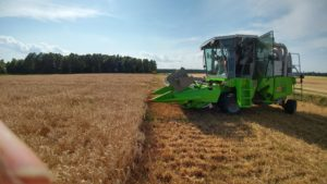 Cover photo for 2018 Beaufort County Wheat Variety Trial Results