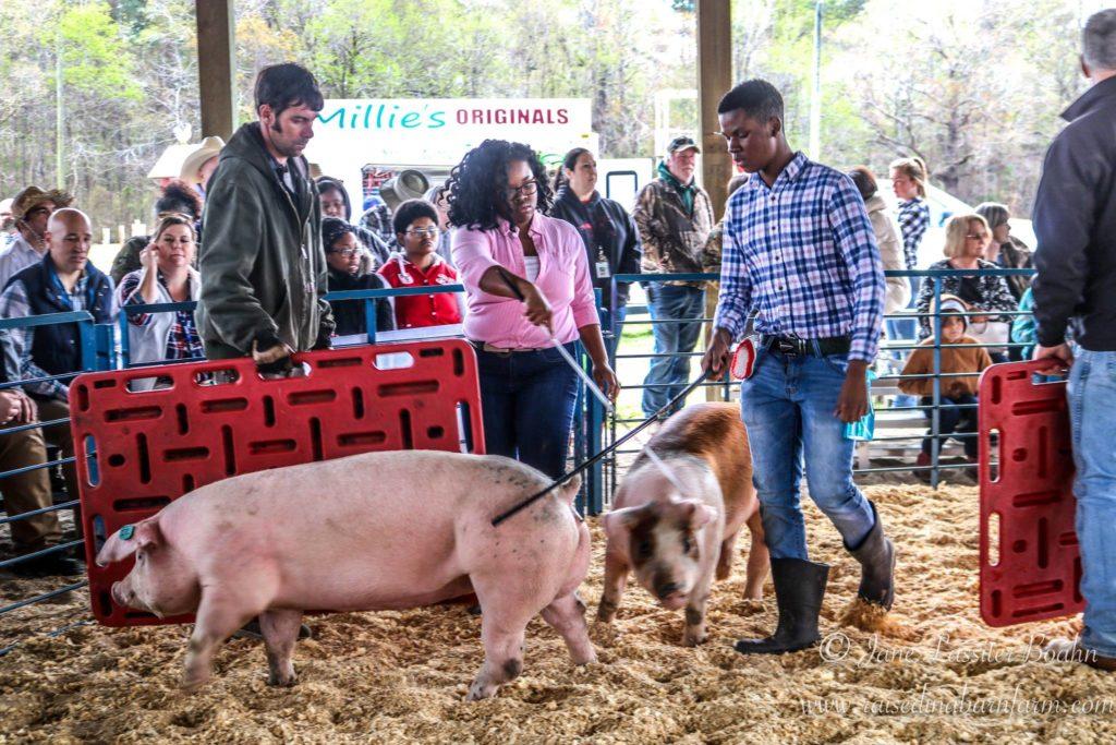 Livestock show participants