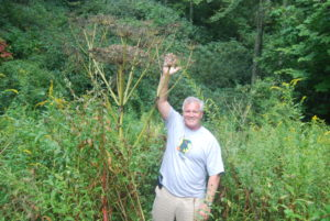 Image of man standing by giant hogweed plant