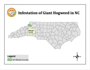 Image of giant hogweed in NC map