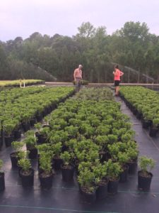 Cover photo for February 11, 2020 Eastern NC Nursery Conference Registration Available Now