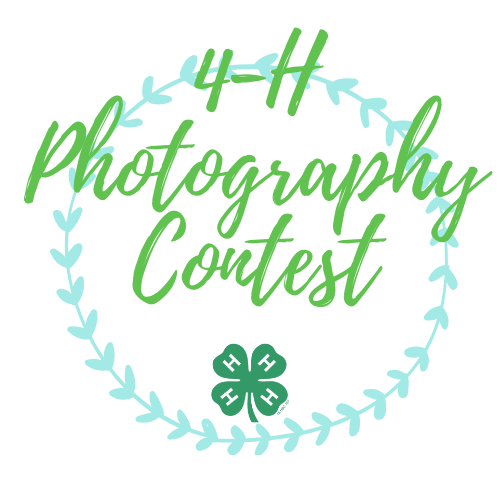 4-H photography Contest