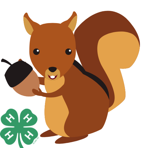 squirrel holding acorn with 4-h clover